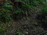 Green River Trail #213 DSCF1091.jpg