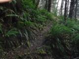 Green River Trail #213 DSCF1092.jpg