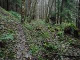 Green River Trail #213 DSCF1093.jpg