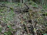 Green River Trail #213 DSCF1094.jpg