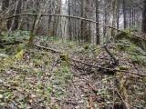 Green River Trail #213 DSCF1095.jpg