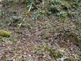 Green River Trail #213 DSCF1096.jpg