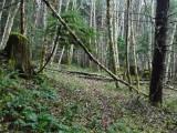 Green River Trail #213 DSCF1098.jpg