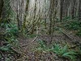 Green River Trail #213 DSCF1099.jpg