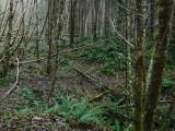Green River Trail #213 DSCF1100.jpg