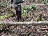 Green River Trail #213 DSCF1101.jpg