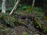 Green River Trail #213 SCF1102.jpg
