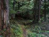 Green River Trail #213 DSCF1106.jpg