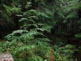 Green River Trail #213 DSCF1108.jpg