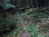 Green River Trail #213 DSCF1109.jpg