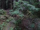 Green River Trail #213 DSCF1110.jpg