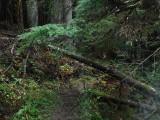 Green River Trail #213 DSCF1111.jpg