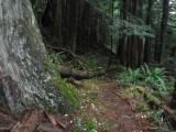 Green River Trail #213 DSCF1115.jpg