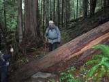 Green River Trail #213 DSCF1116.jpg