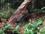 Green River Trail #213 DSCF1117.jpg