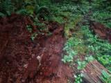 Green River Trail #213 DSCF1118.jpg