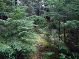 Green River Trail #213 DSCF1119.jpg
