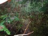 Green River Trail #213 DSCF1120.jpg