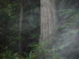 Green River Trail #213 DSCF1121.jpg