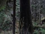 Green River Trail #213 DSCF1122.jpg