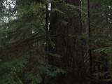 Green River Trail #213 DSCF1123.jpg