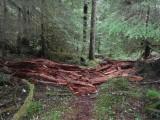 Green River Trail #213 DSCF1124.jpg