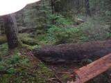 Green River Trail #213 DSCF1125.jpg