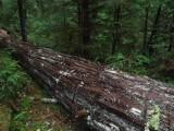 Green River Trail #213DSCF1126.jpg