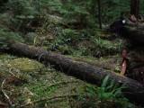 Green River Trail #213 DSCF1127.jpg