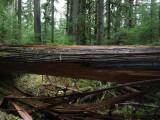 Green River Trail #213 DSCF1128.jpg