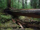 Green River Trail #213 DSCF1129.jpg