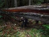 Green River Trail #213 DSCF1130.jpg