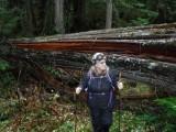Green River Trail #213 DSCF1131.jpg