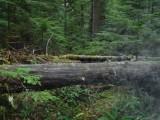 Green River Trail #213 DSCF1132.jpg
