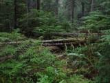 Green River Trail #213 DSCF1133.jpg