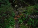 Green River Trail #213DSCF1134.jpg