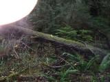 Green River Trail #213 DSCF1135.jpg