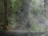 Green River Trail #213 DSCF1136.jpg