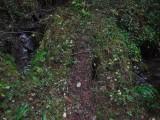 Green River Trail #213 DSCF1137.jpg