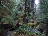 Green River Trail #213 DSCF1139.jpg