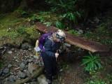Green River Trail #213 DSCF1140.jpg