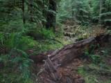 Green River Trail #213 DSCF1141.jpg