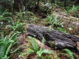 Green River Trail #213 DSCF1142.jpg