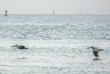 Farallon Whale Watch 2018