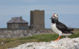 2018 Farne Islands- UK