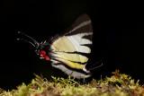 Endemic species of Borneo