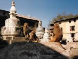 Trip to Nepal 1984