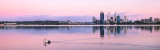 Pelican on the Swan River at Sunrise, 20th November 2012