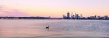 Black Swan on the Swan River at Sunrise, 12th November 2013