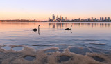 Black Swans on the Swan River at Sunrise, 14th November 2013